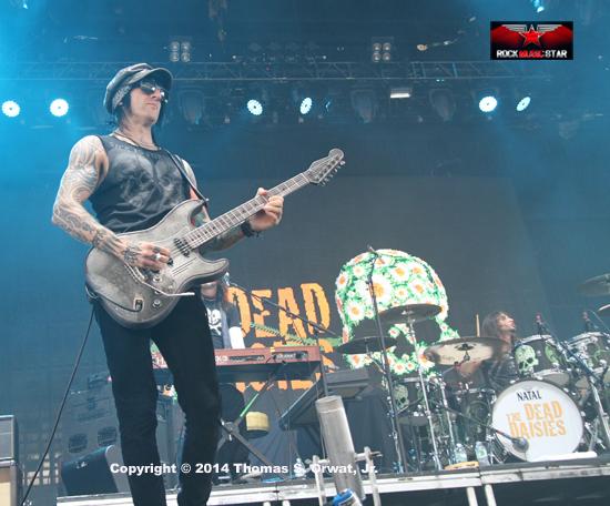 dead dasies 2014 7